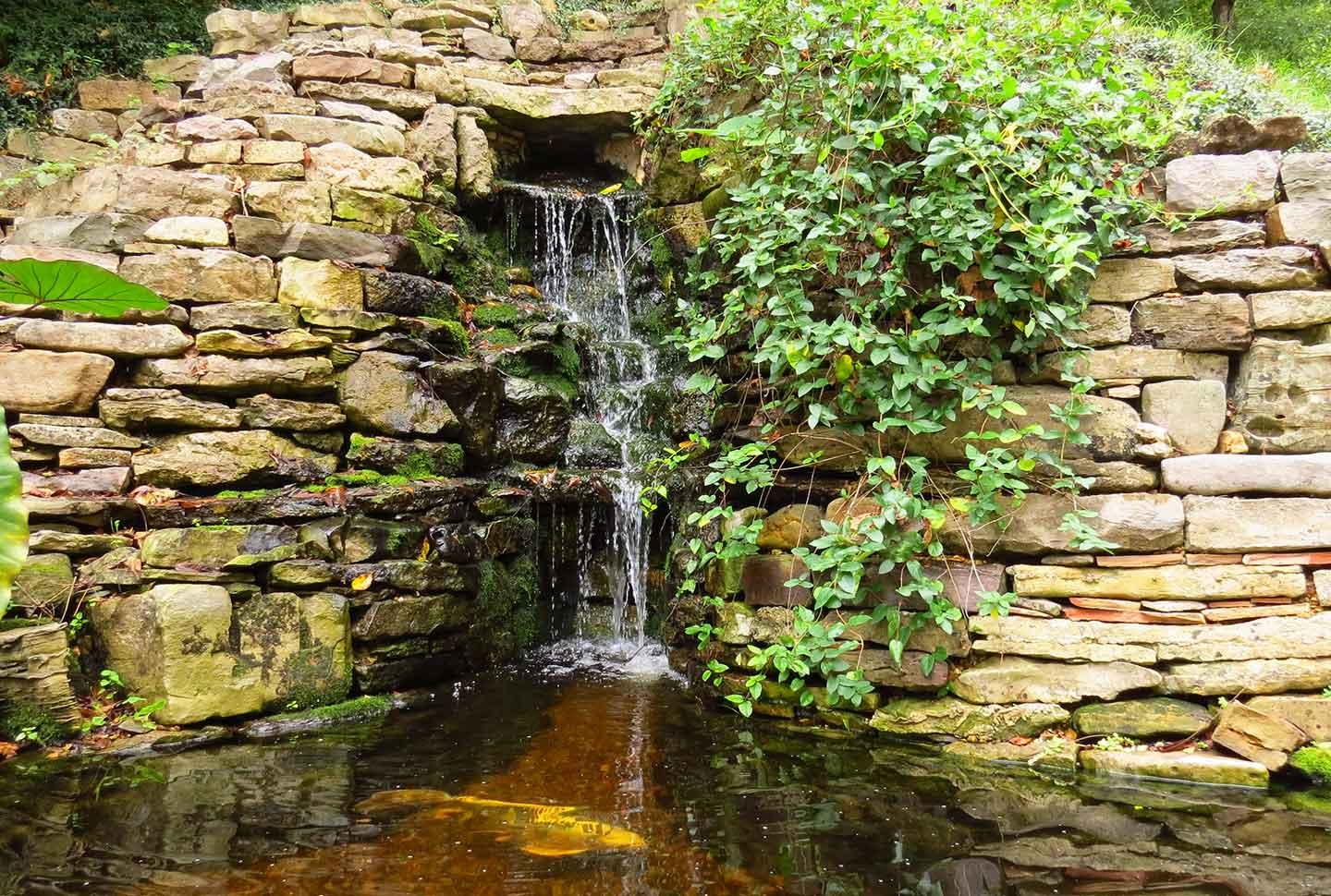 pond-and-waterfall
